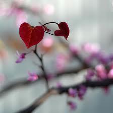 Одиночество весной